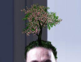 productos naturales para el pelo